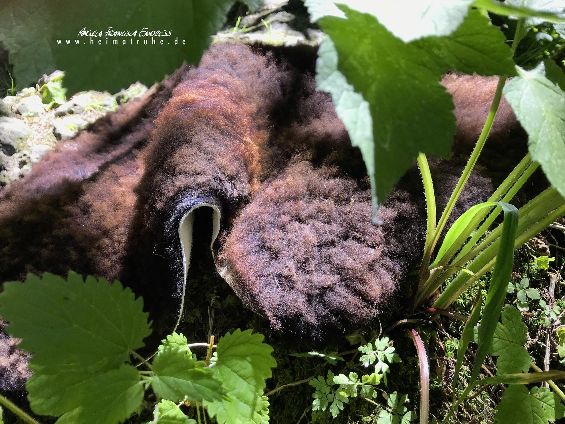 dunkles Schaf-Fell in der Botanik