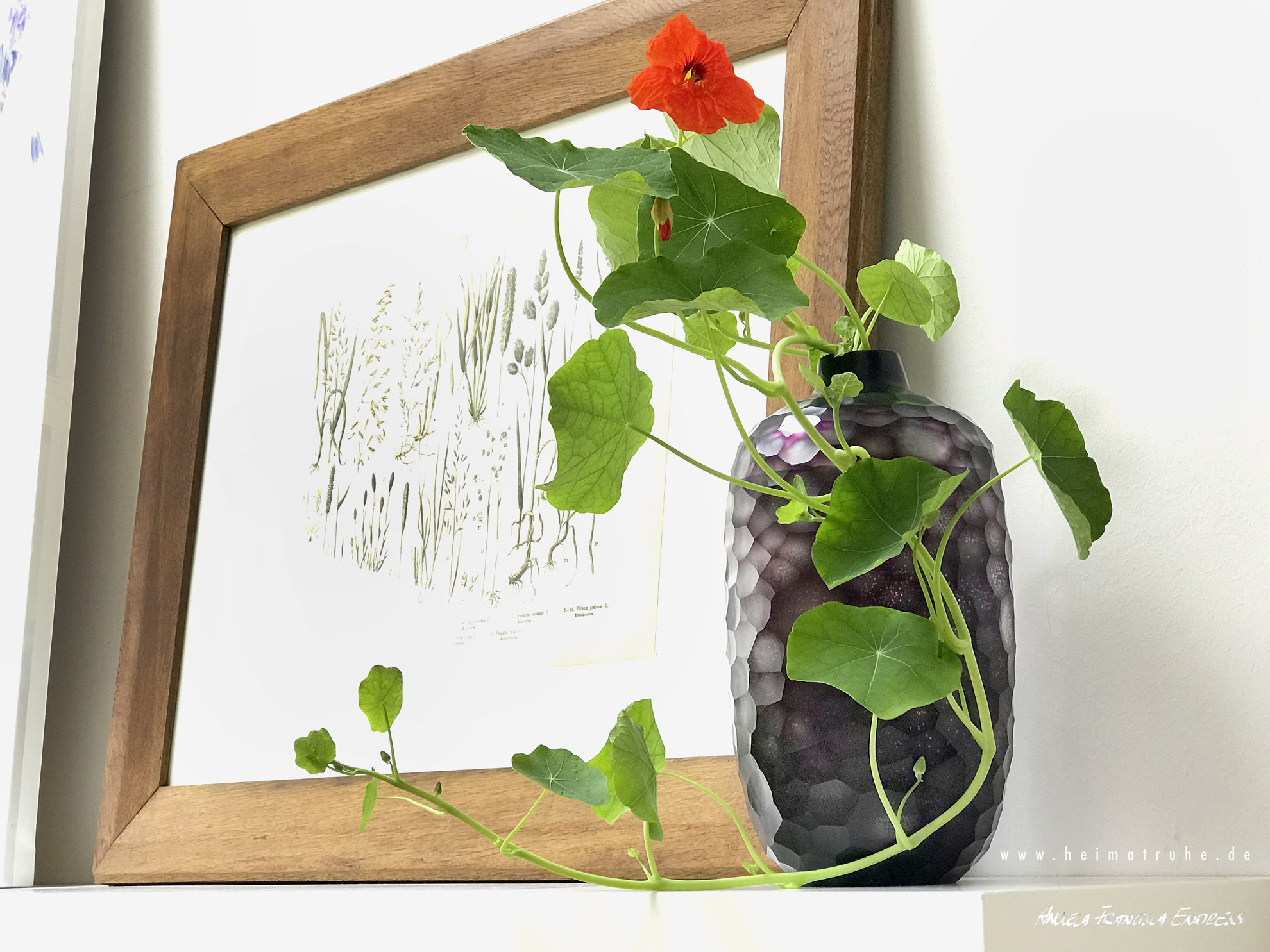 Kapuzinerkresse in Glasvase