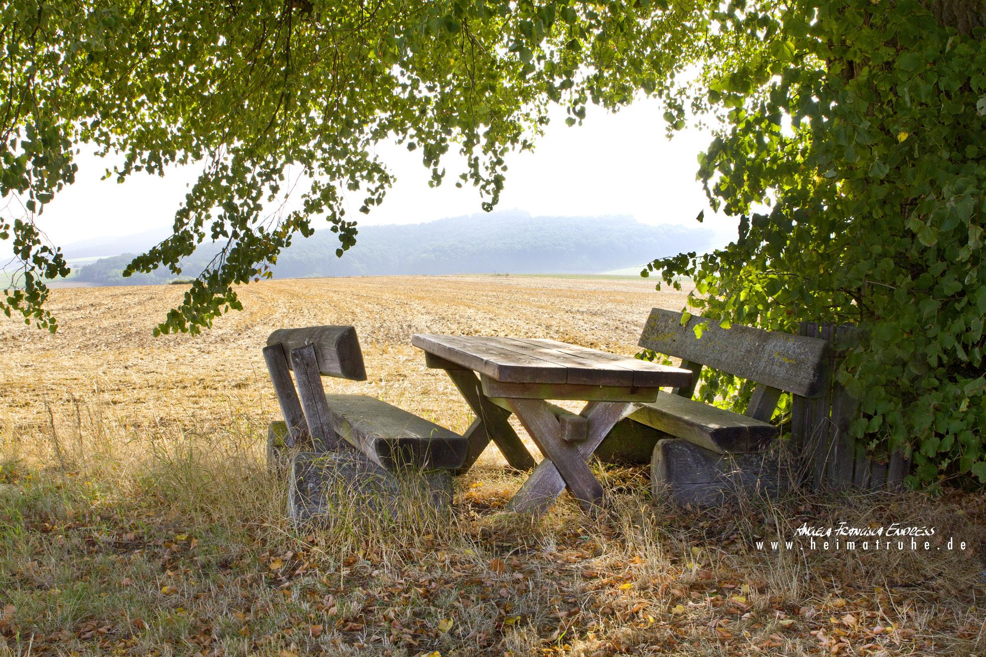Tisch und Bank unter Linde am Feldrand