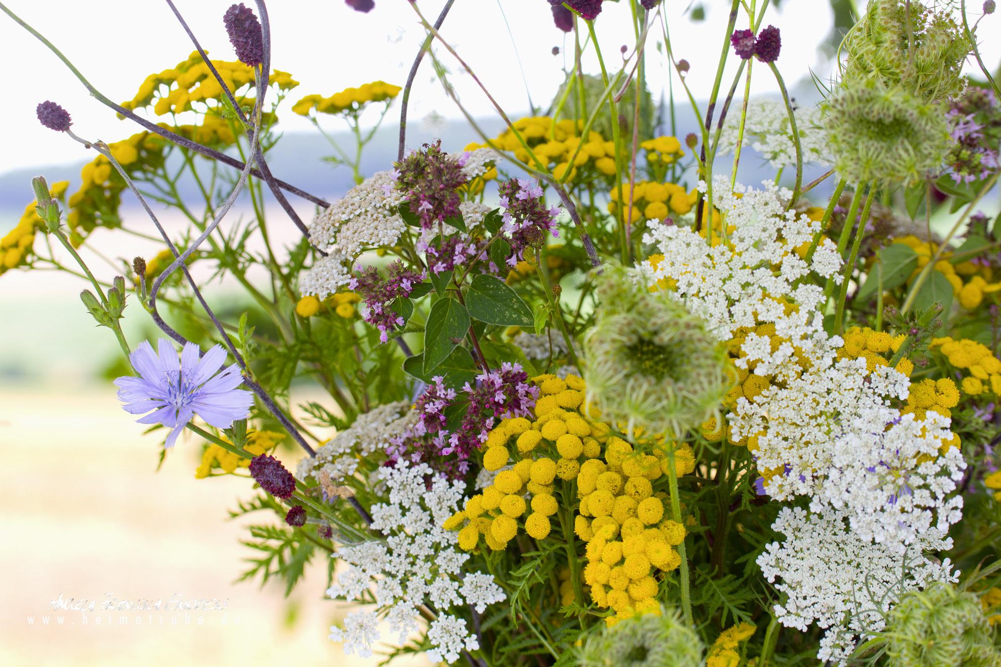 Wiesenblumen, Rainfarn, Woilde Möhre, Grosser Wiesenknopf, Majoran, Wegwarte