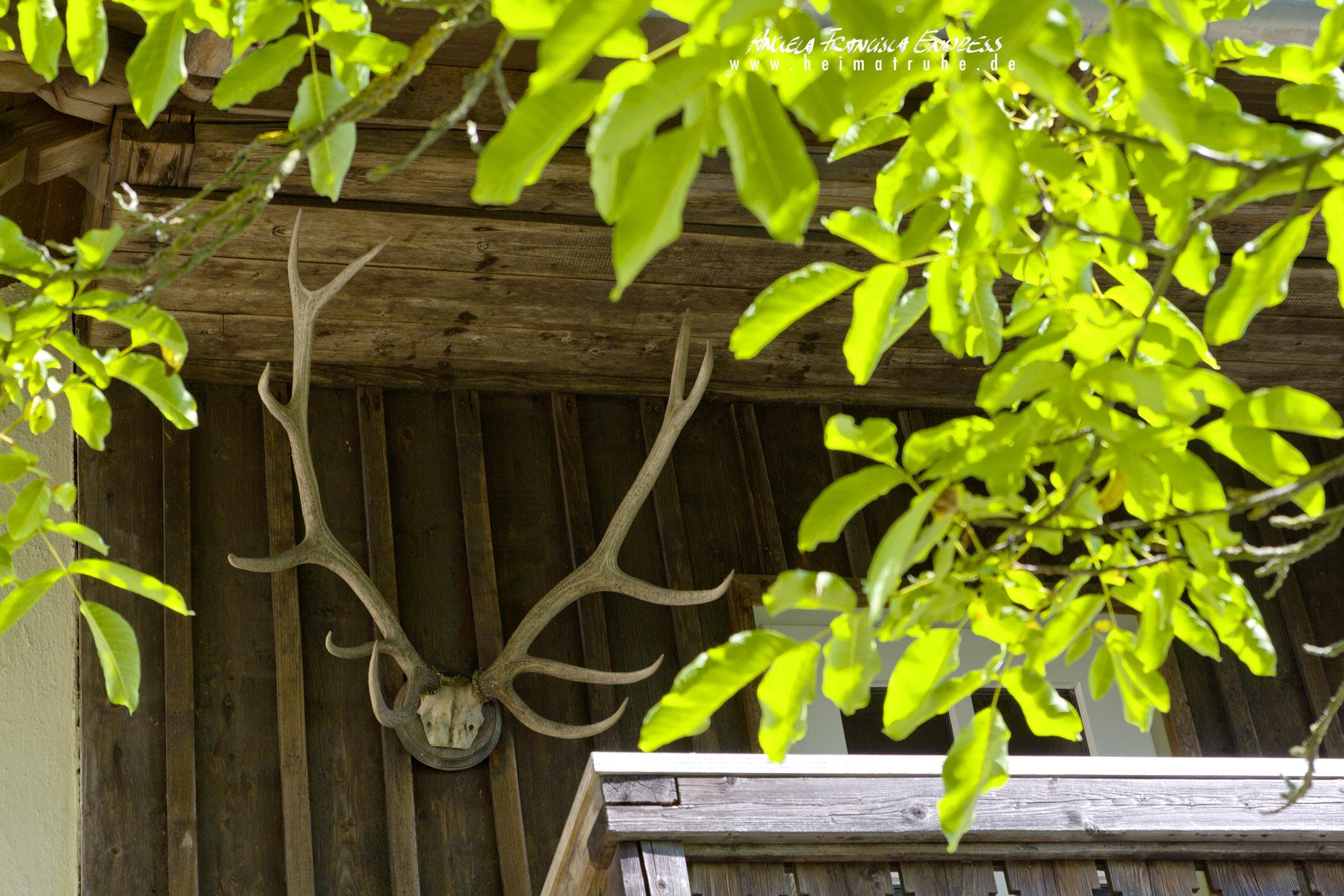 Balkon der Ferienwohnung der Waldgaststätte Steinhaus