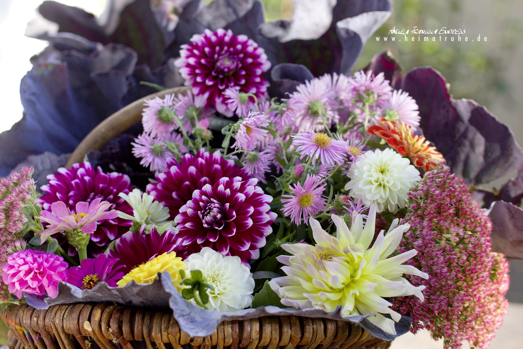 Dahlein-Strauss Herbstblumen