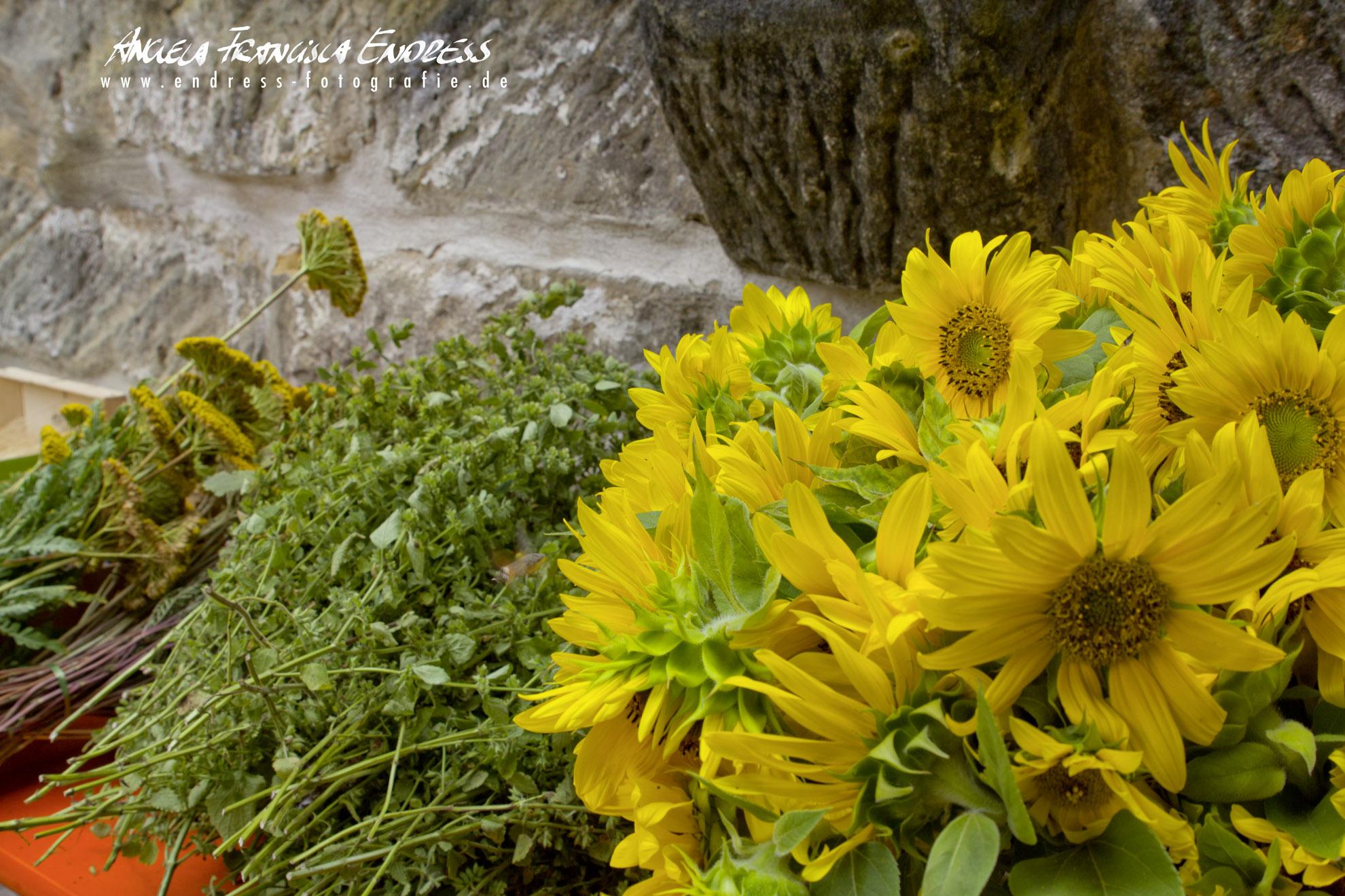 Kräuter, Sonnenblumen Blüten