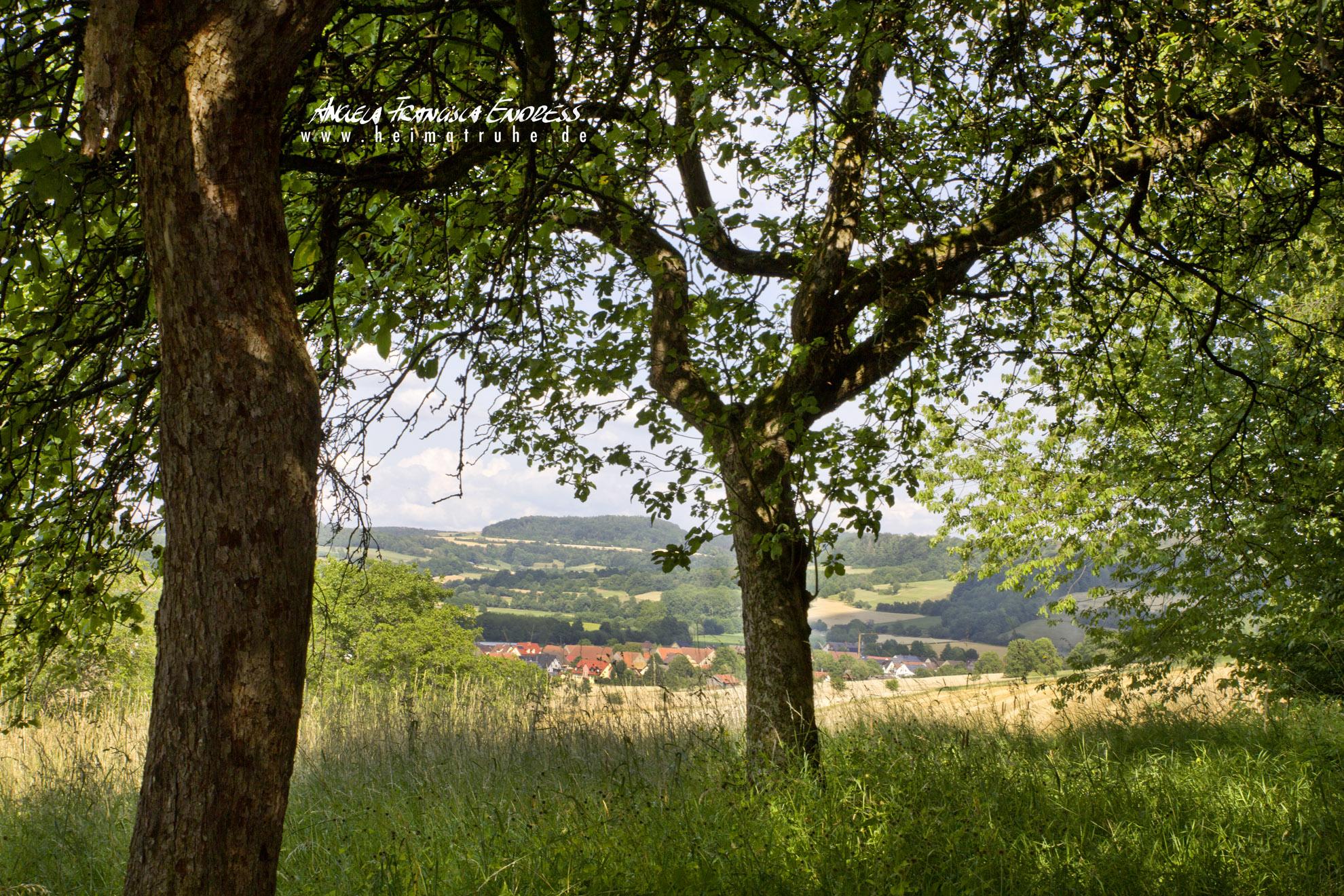 twiese am Hang zum Dörnig hinauf von Loffeld Obermain Jura