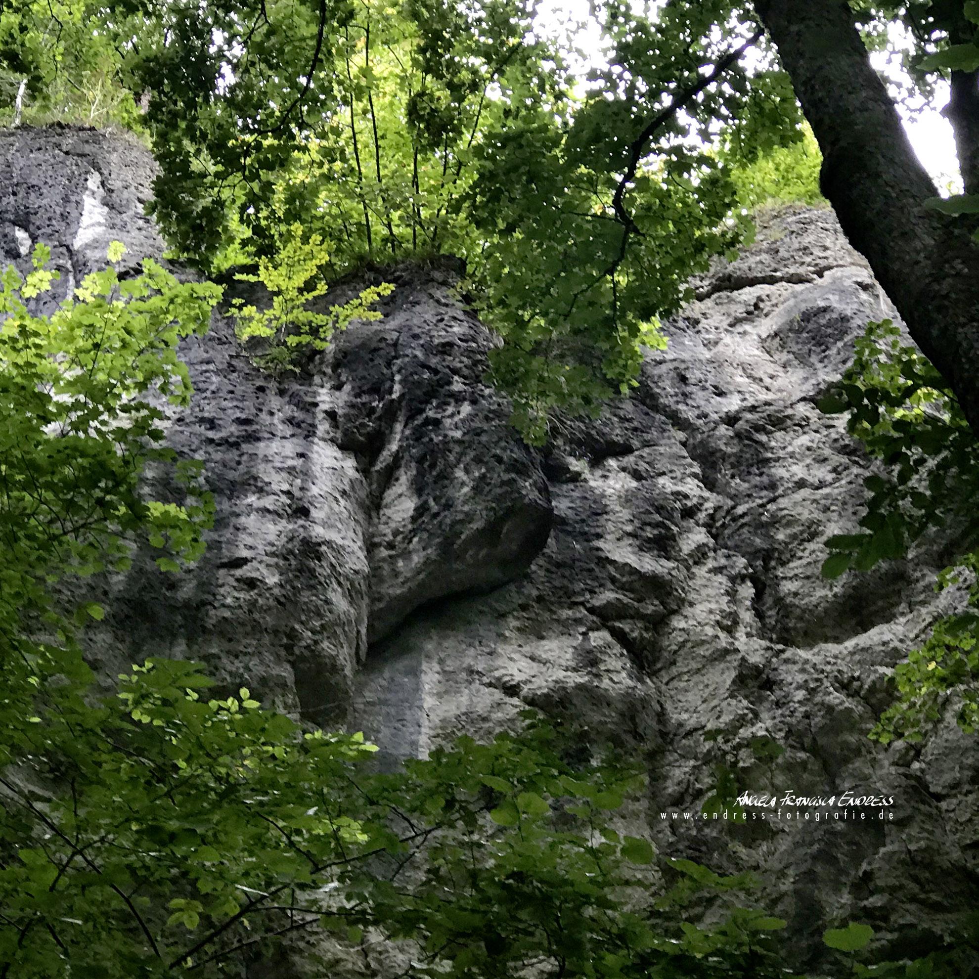 Felsen im Wald an der Wiesent im Tal