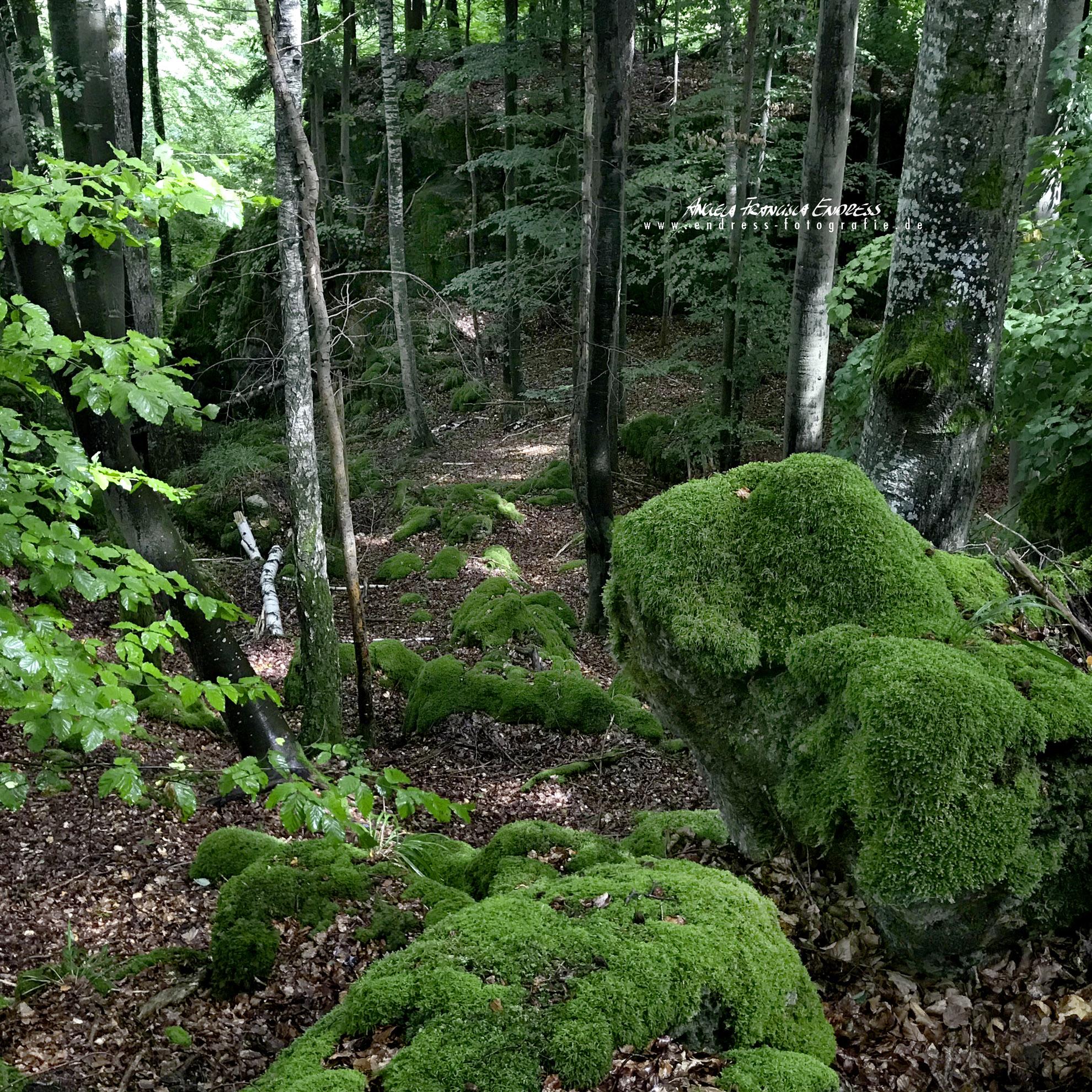 bemooste Felsen und Schlucht im Wald