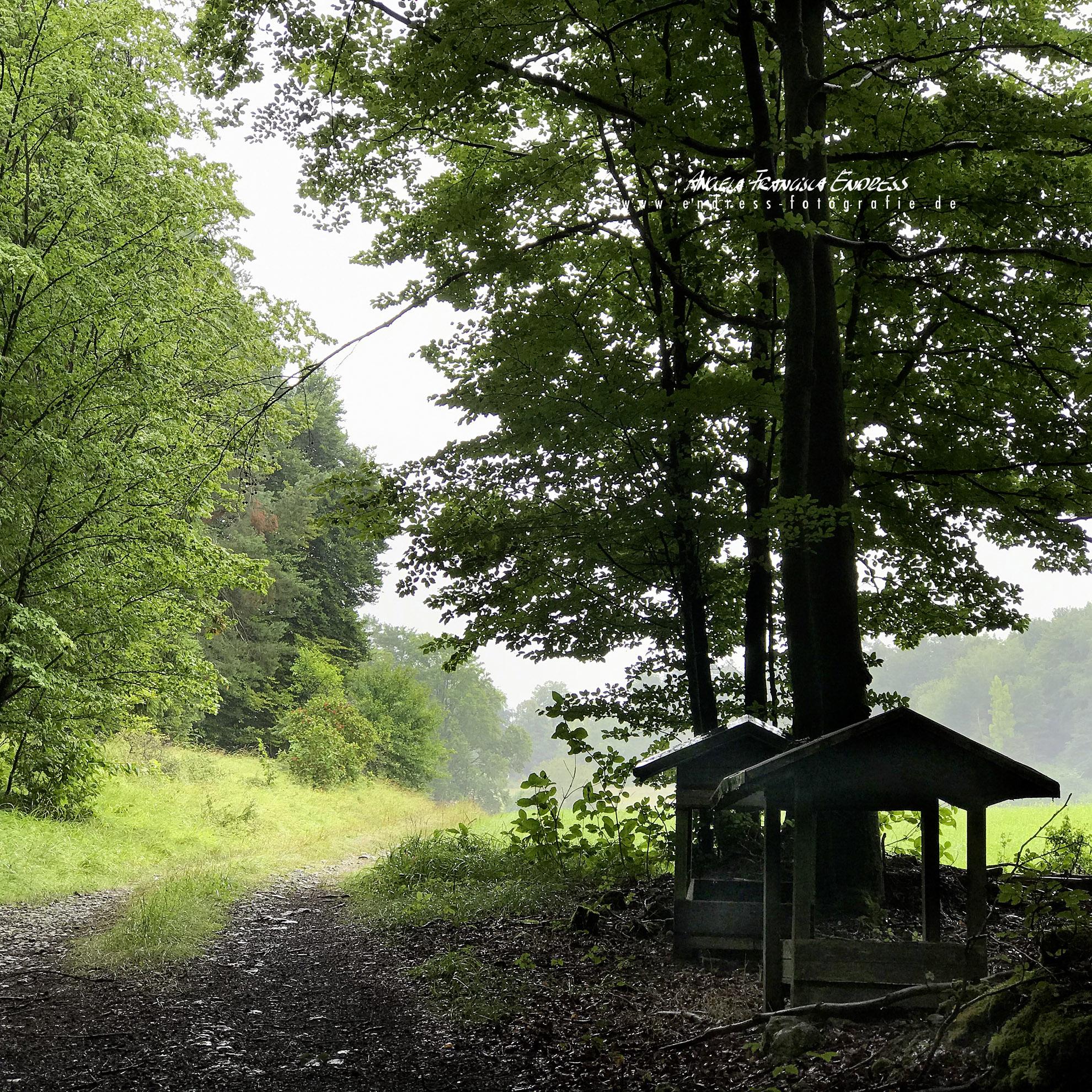auf dem Weg aus dem Wald heraus Richtung Köttweinsdorf