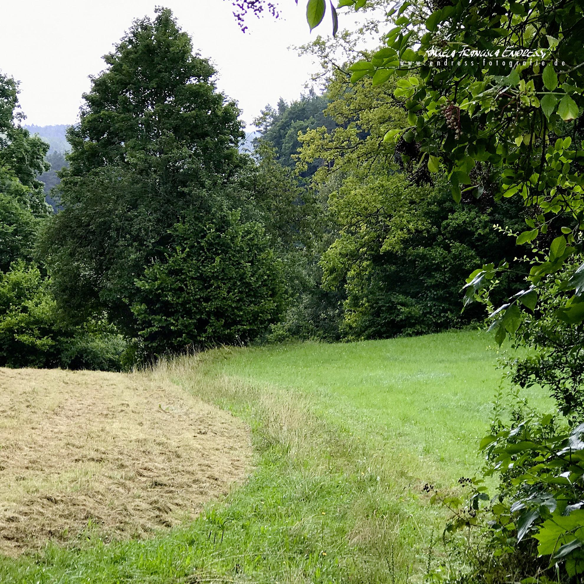 zwischen Köttweinsdorf und Moschendorf