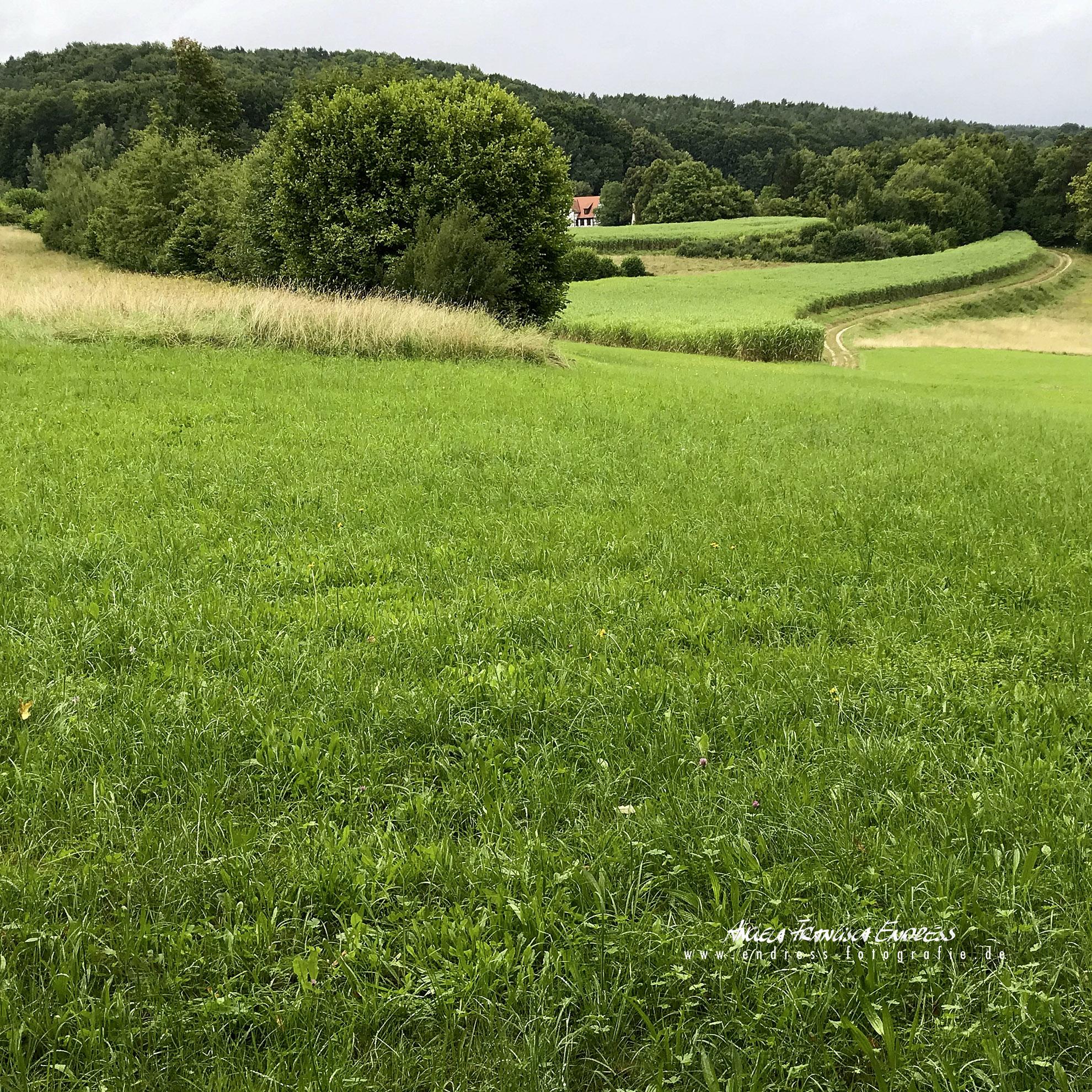 Blick Richtung Moschendorf vorm Wald Richtung Forsthaus