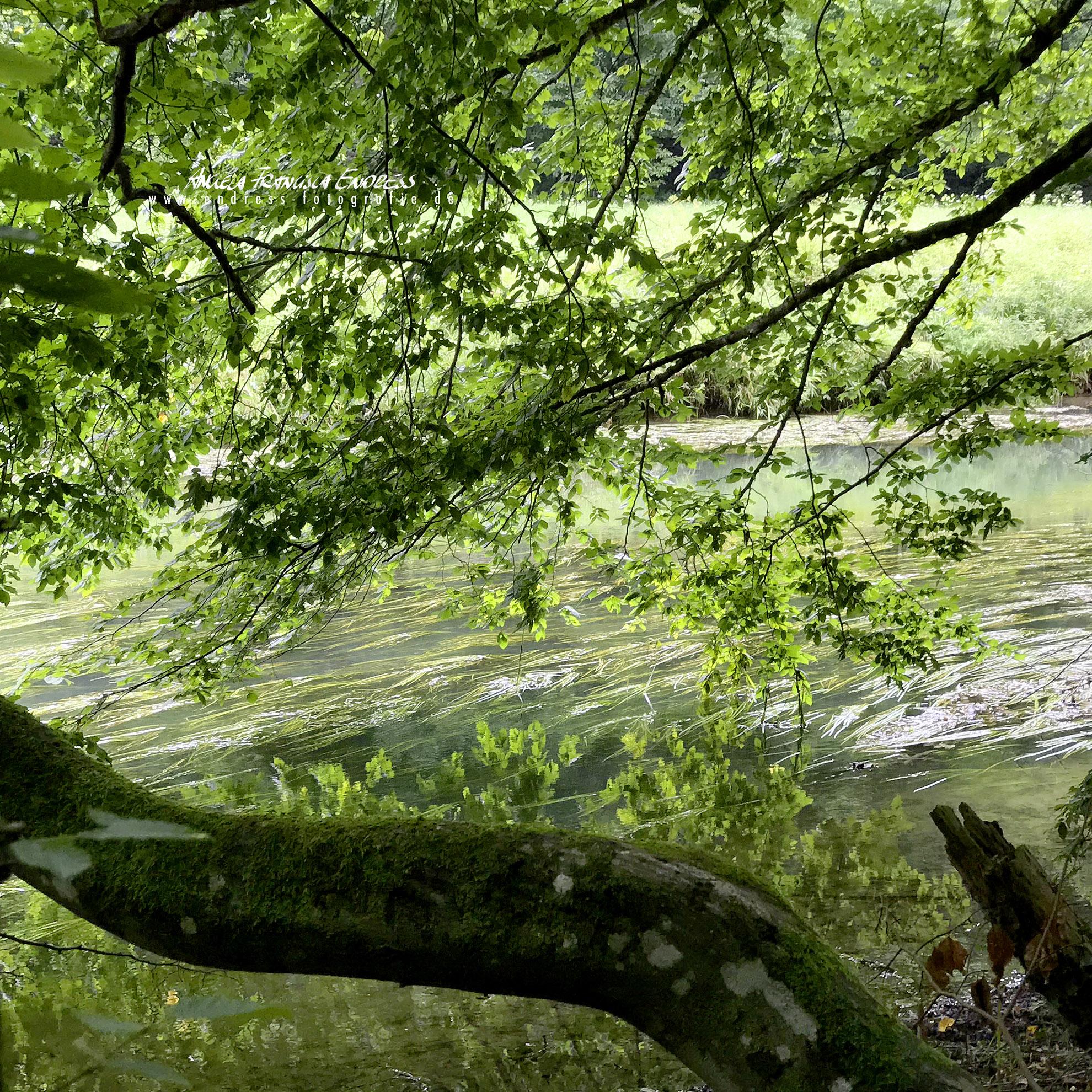 Wiesent Fluss mit Ufer und Bäumen